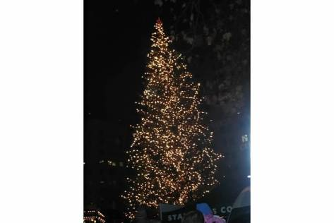 PDX tree