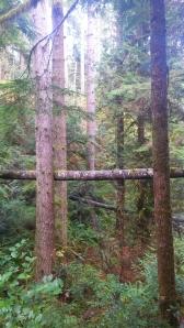 trees PW